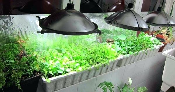 подсветка растений люминесцентными лампами