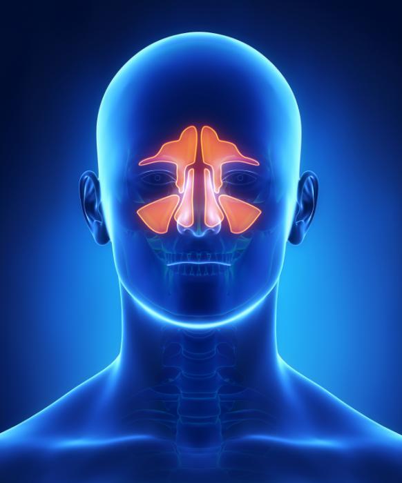 рентген гайморовых пазух при гайморите