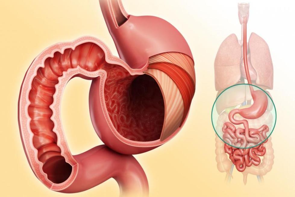 Абсорбенты для кишечника