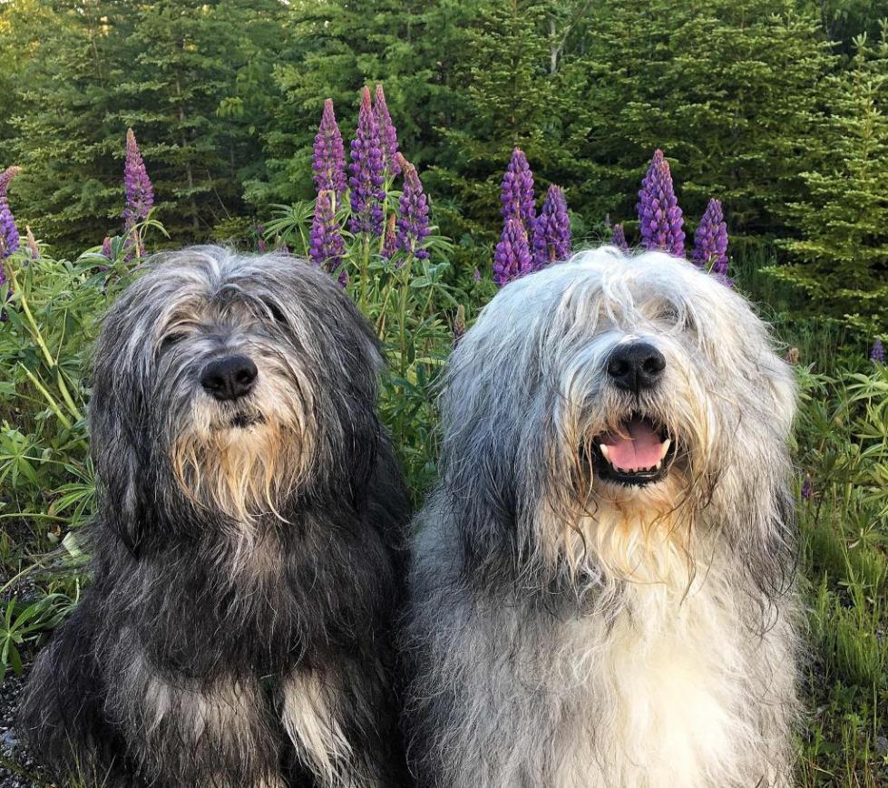 Собаки в полях