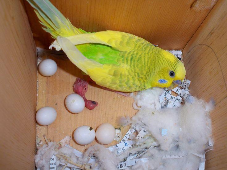 Вылупление яиц