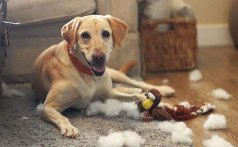 инородные предметы в кишечнике собаки