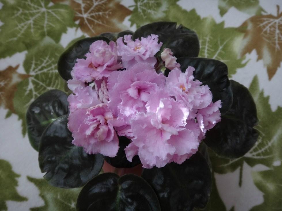 уникальные бутоны цветка