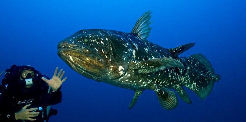 рыба целикант