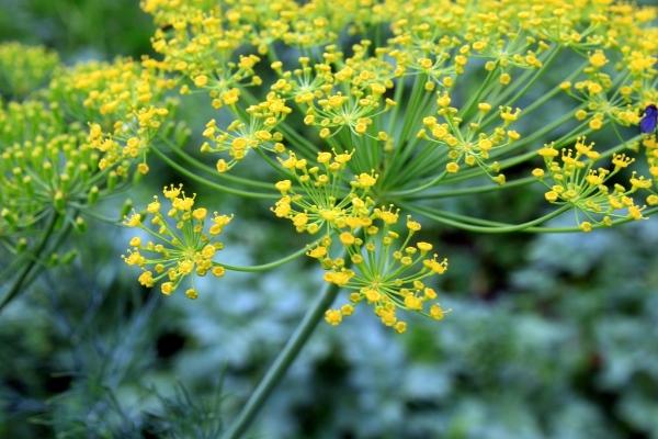Лечебное растение