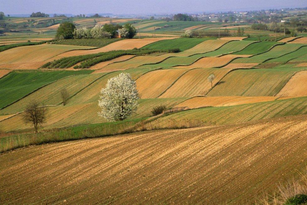 Распределение земельных угодий
