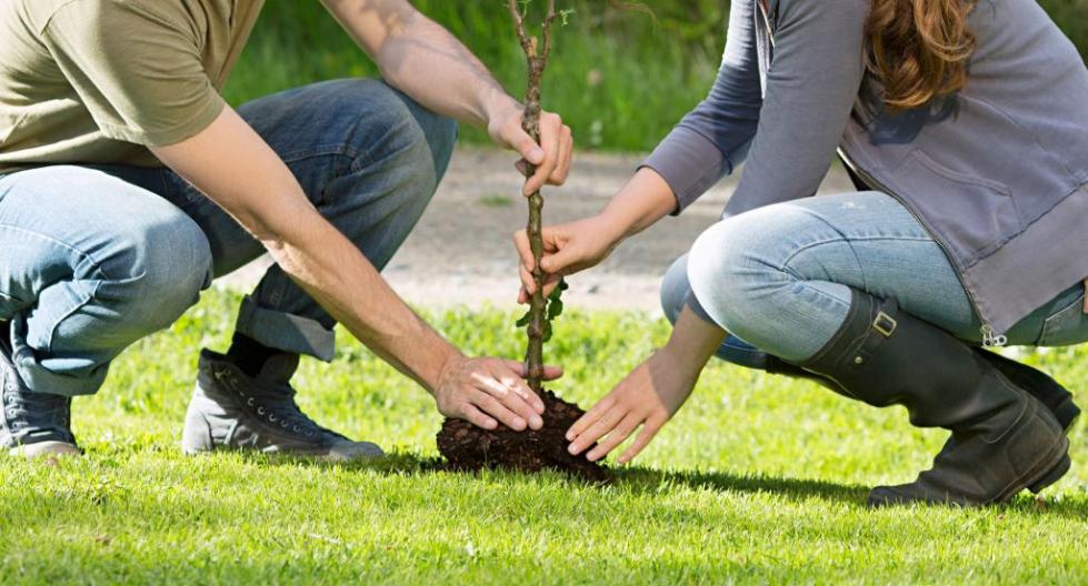 сажать деревья во сне