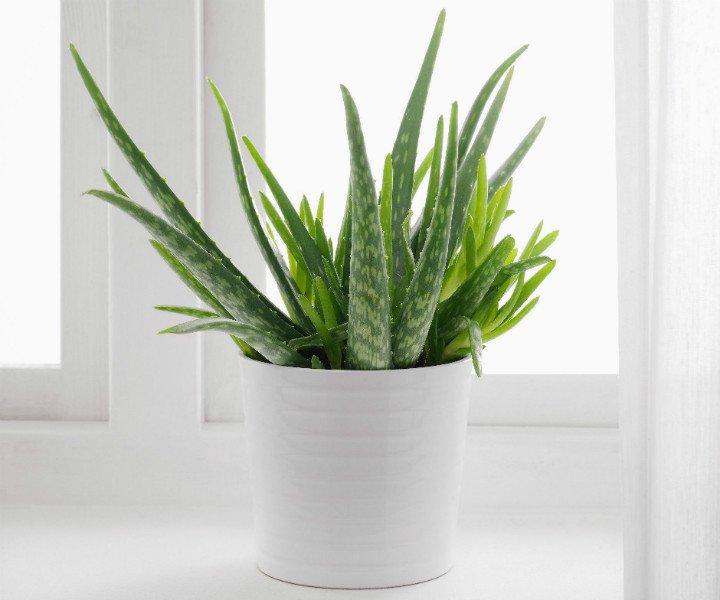 Растения, выделяющие кислород