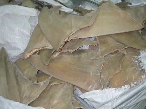 отрезанные плавники акул