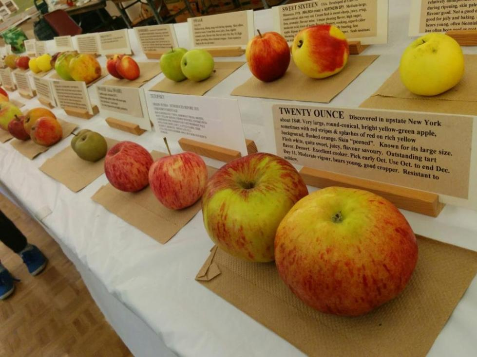 Товарный вид яблок