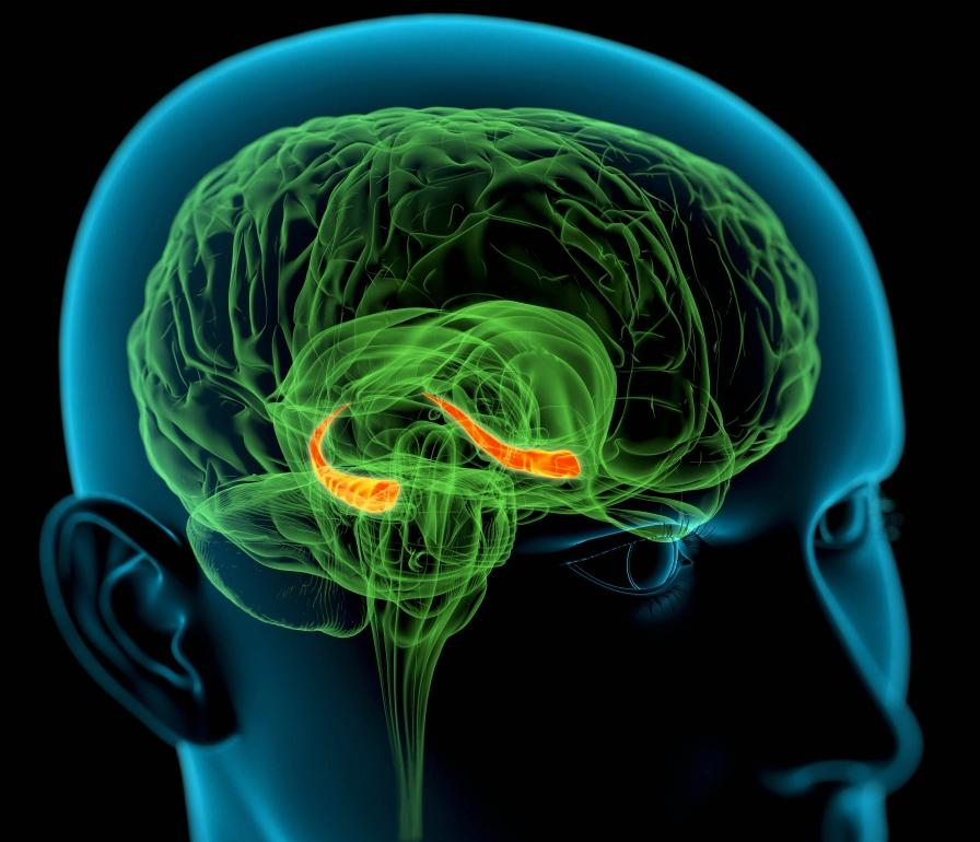 Глисты в мозге симптомы