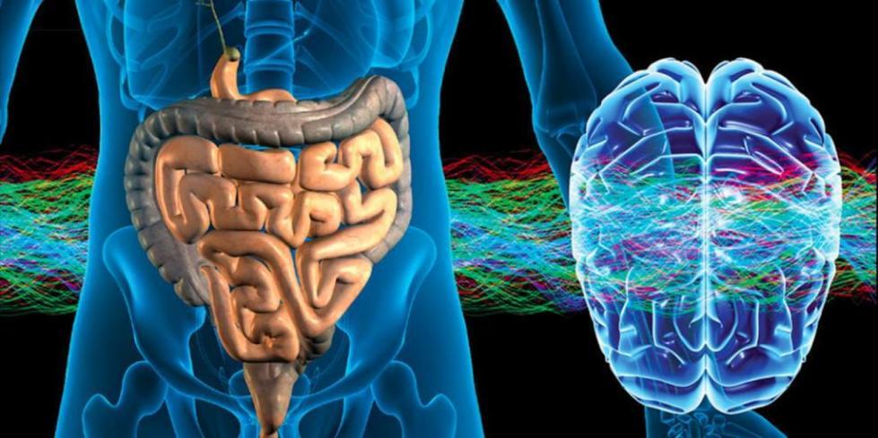 Глисты в мозге человека