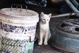 Katze auf dem Markt in Chiang Mai