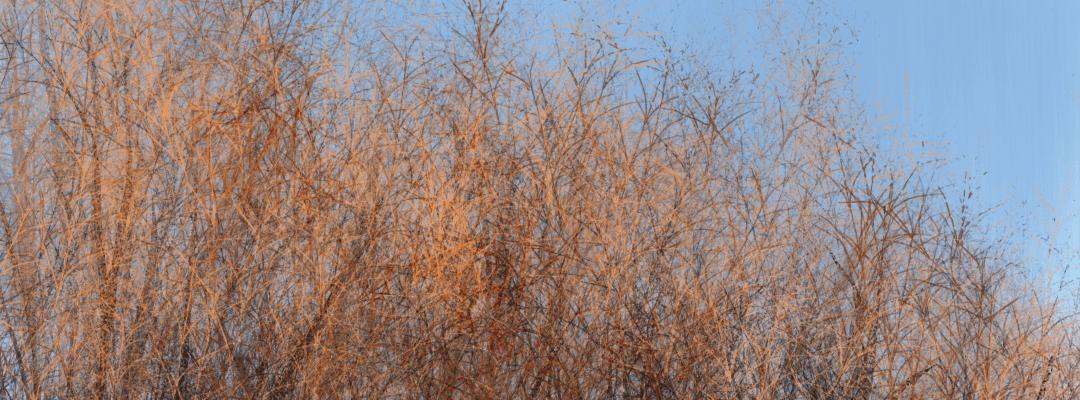 Cielo #34 Sunset on trees