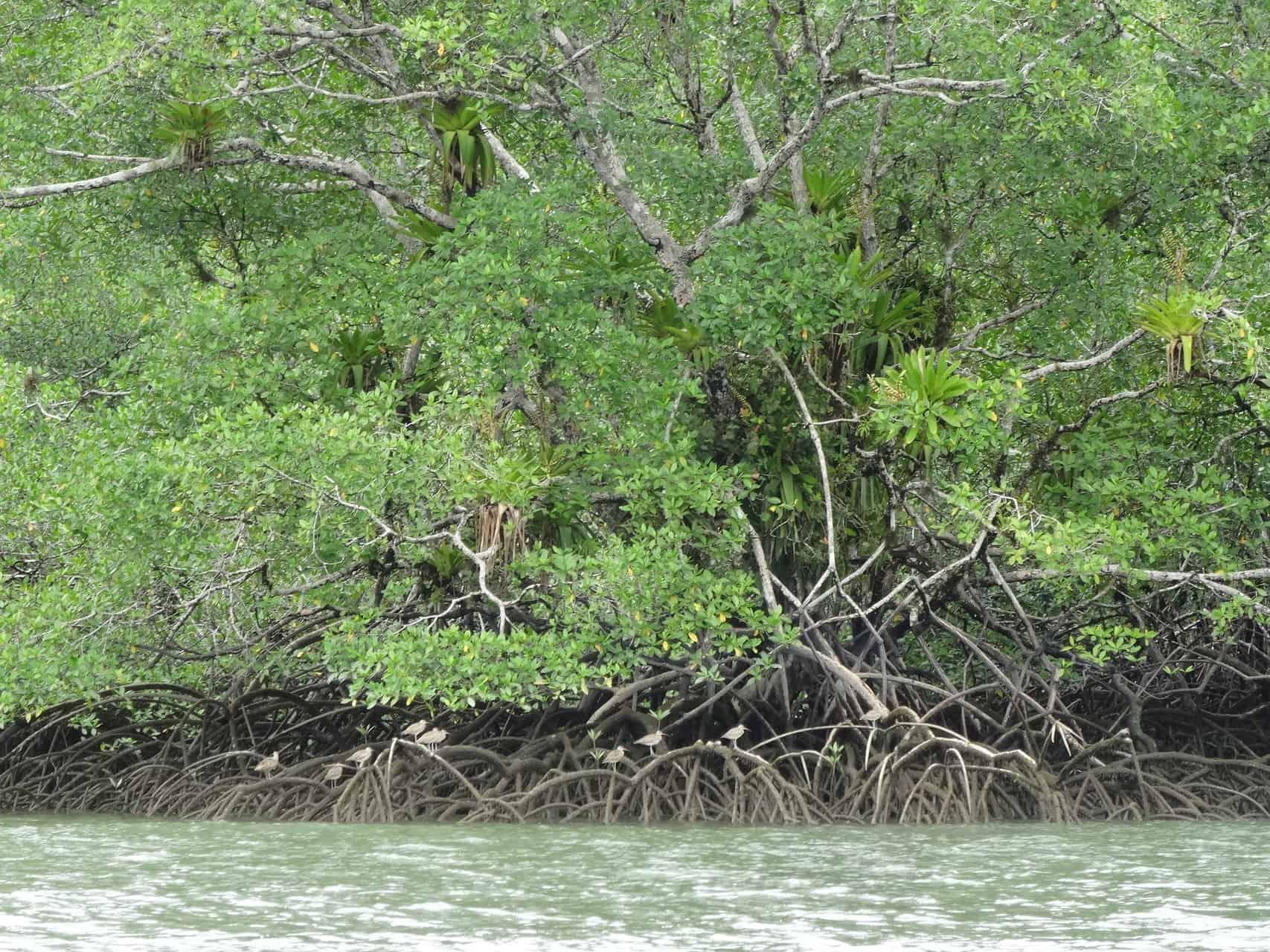 Mangroven by Textrakt