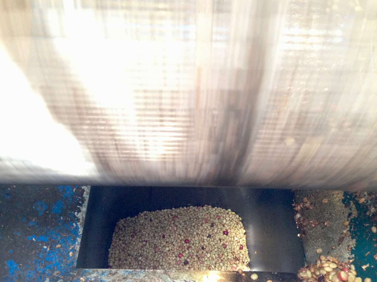 Eine Walze entfernt die Frucht von der Schalte (Bild: M. Schäfer, Textrakt)