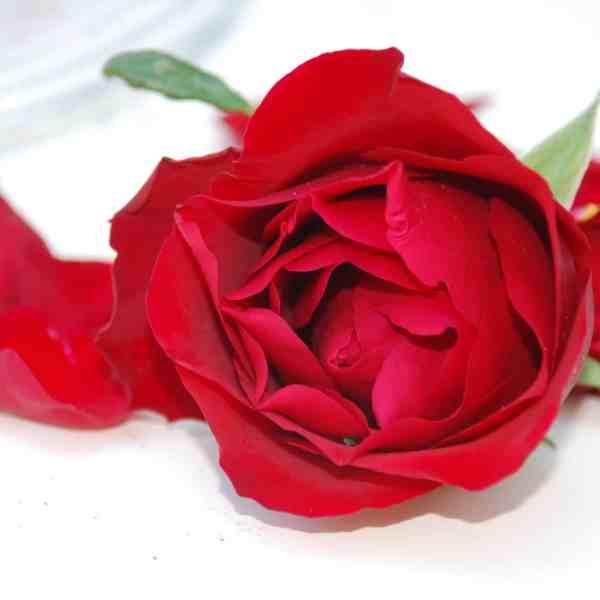 Rosen sind rot (Bild: Textrakt)