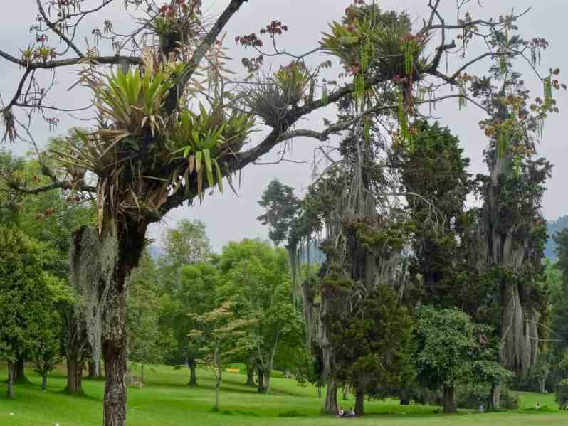 Parque Bosque Popular Del Prado, Manizales, Kolumbien (Bild: M: Schäfer, Textrakt)