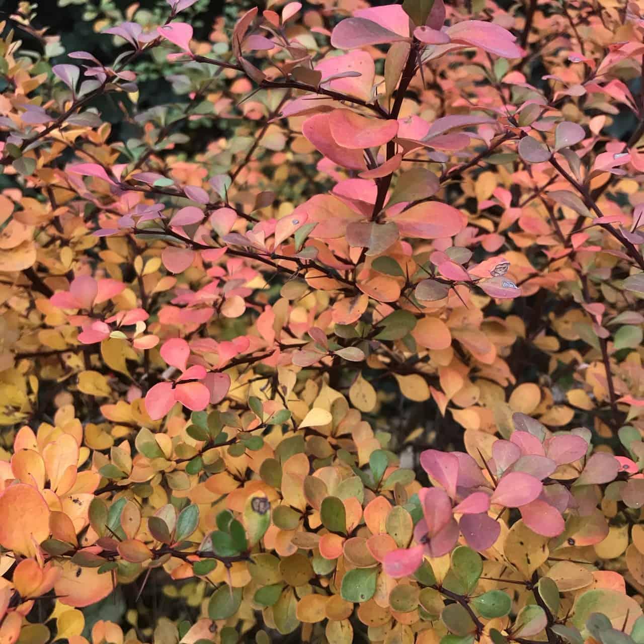 Herbstbusch (Bild: Martina Schäfer, Textrakt)