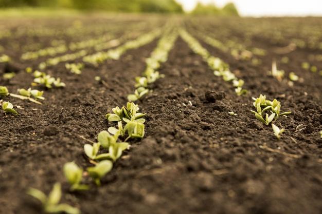 Comienza la Diplomatura Superior en Agroecología