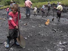 Auch Kinder graben mit nach dem grünen Gold