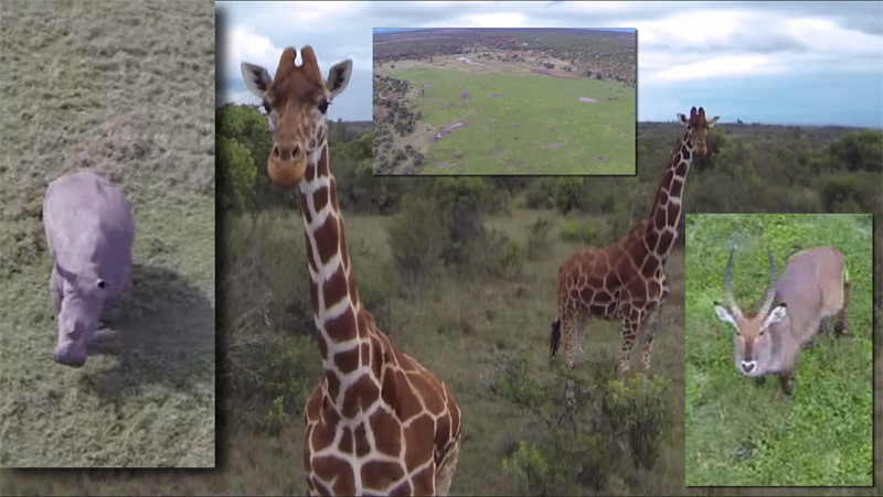 Drohnenfilm im Wildreservat in Kenia