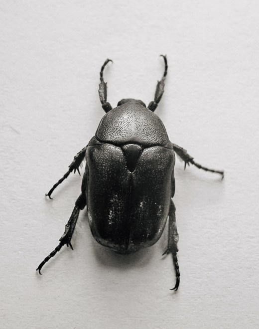 beetle_00