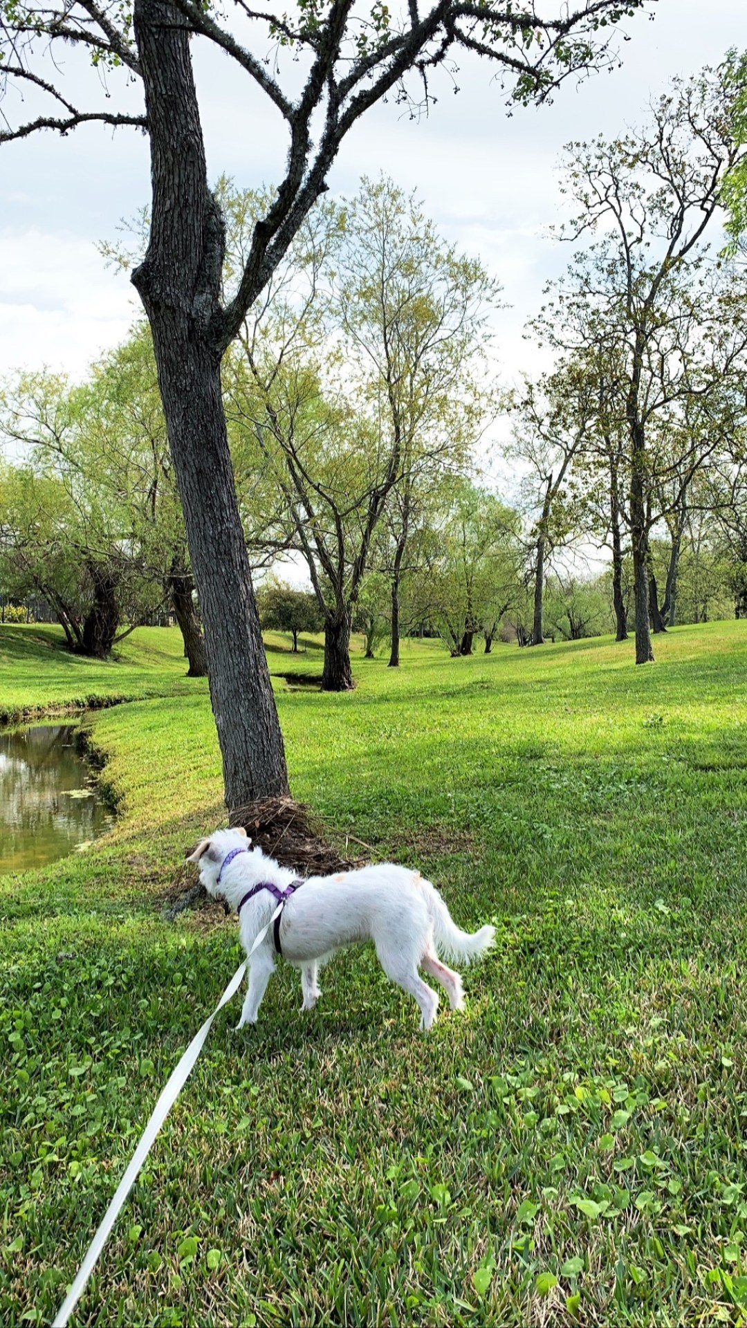 walking dogs, activities to relieve stress, ways walking is good for you