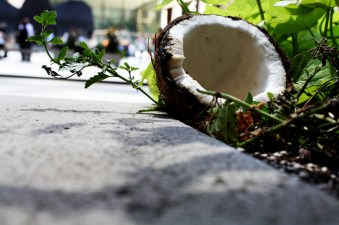 Coconut in the City - Chicago