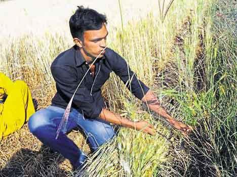 sehore-farmer