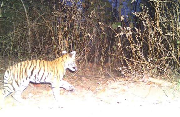 Kanha Tiger Reserve, madla, Madhya Pradesh