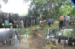 कान्हा टाइगर रिजर्व में हाथियों की मौज