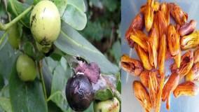 पौधे से बनी कैंसर की दवा, करेगी जीवन रक्षा