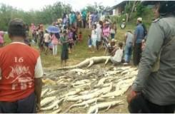 गुस्साई भीड़ ने मार डाले 300 मगरमच्छ, लिया एक व्यक्ति की मौत का बदला