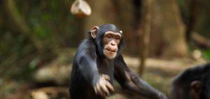 हवन के लिए लकड़ी इकट्ठा कर रहे बुजुर्ग की बंदरों ने पत्थर मार की हत्या, कैसे करें FIR