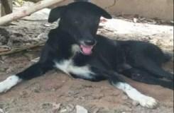 मां ने खेत में जिंदा दफनाया नवजात, कुत्ते ने बचाई जान