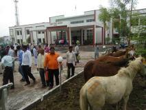 अजब गजब:  कलेक्ट्रेट जनसुनवाई में घोड़े लेकर पहुंचे किसान,जानिए क्या हैं मामला