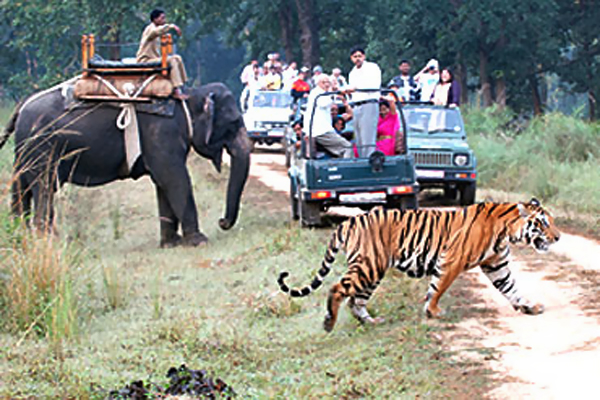 Kanha Kisli National Park