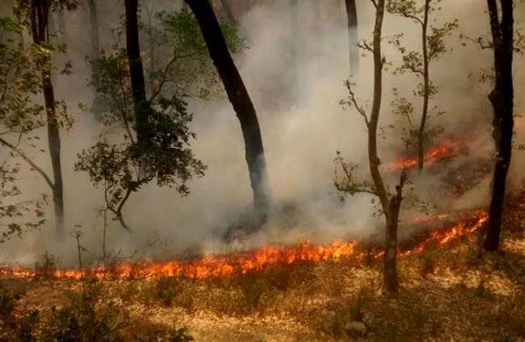 Burning uttarakhand-forest-fire