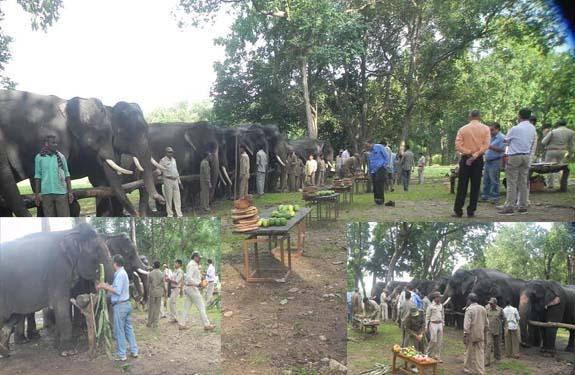 Kanha National Park mandla Madhya Pradesh copy