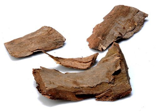 c 41Healthy benefits of the bark of Arjuna tree, these 6 diseases will never happen again in life