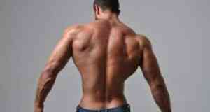 best workout programs for the back