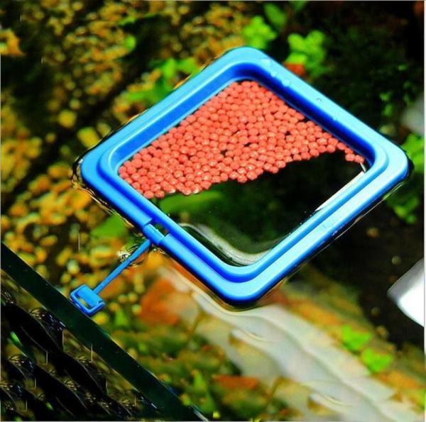 Floating Fish Feeding Ring Fish Aquarium Tank Feeder eBay