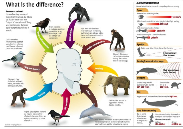 The Difference Between Humans and Animals
