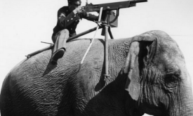 man on elephant with gun