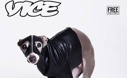 Vice dog