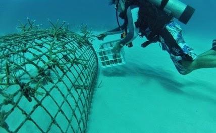 Punta Cana coral