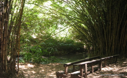 Swamp in Africa