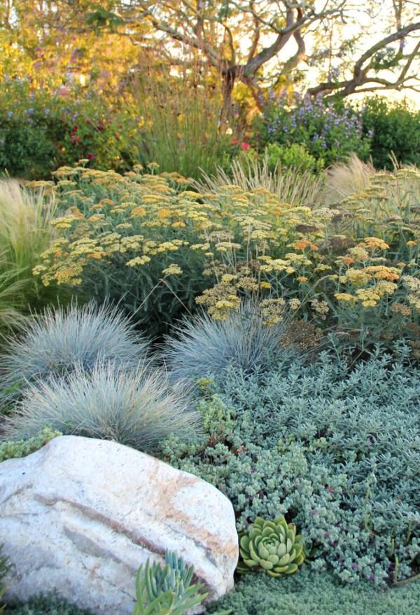 native plants - terra ferma landscapes