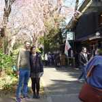Somei-yoshino cherry tree blossoms coming out at Ueno Park (March 21)